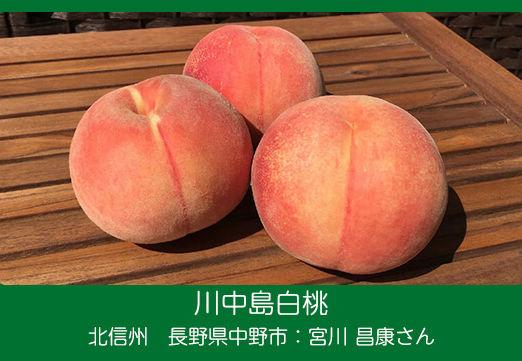 peach-m