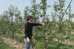 高密植栽培に取り組む