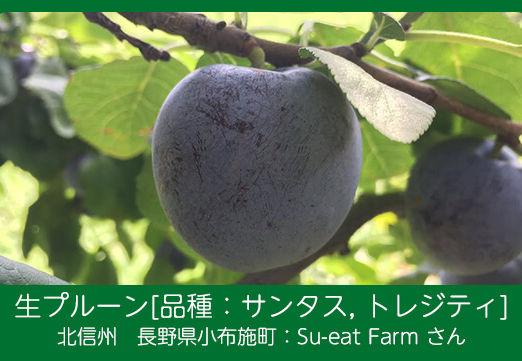 prune-s