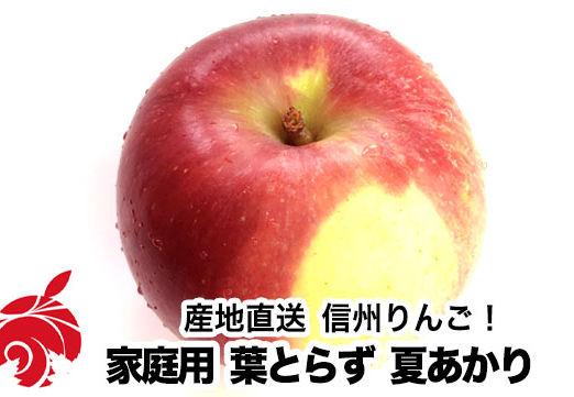 natsu-b