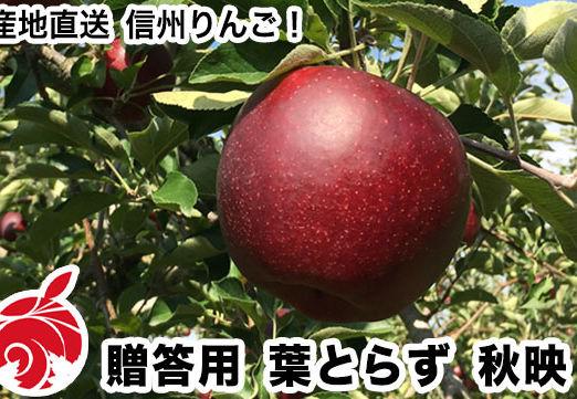 akibae-a